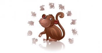 10 weetjes over de aap