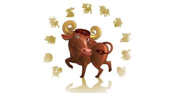 10 weetjes over de buffel