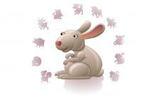 10 weetjes over de chinese kat of konijn