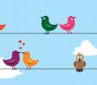 liefde vogeltjes