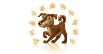 10 weetjes over de hond