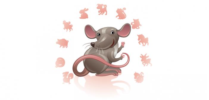 10 weetjes over de rat