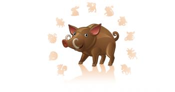 10 weetjes over het varken