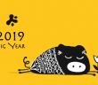 2019 - jaar van het varken